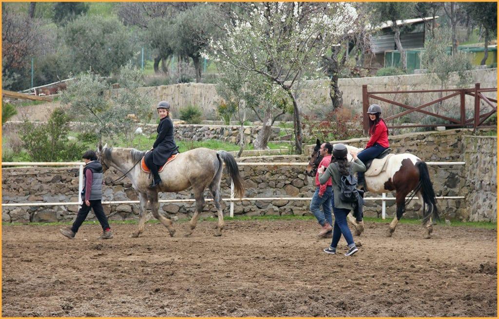 مزرعة الخيول في طرابزون